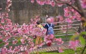 內湖 櫻花 2020:DSC_0754_調整大小.JPG