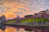內湖 櫻花 2020:DSC_0836_調整大小.JPG