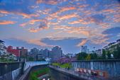 內湖 櫻花 2020:DSC_0927_調整大小.JPG