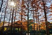 湖岸落羽松 原住民文化主題公園:DSC_0174_調整大小.JPG