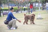 大型貴賓犬:DSC_8754_調整大小.JPG