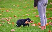 英國 白金漢宮 公園:DSC_0227_調整大小.JPG