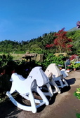 竹子湖 海芋季 大賞園:94128066_1600729800079947_4153584974139752448_n_調整大小.jpg