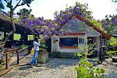 粗坑窯 紫藤:DSC_9872_調整大小.JPG