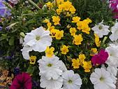 新生公園 玫瑰花:IMG_20210331_175051_調整大小.jpg