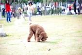 大型貴賓犬:DSC_8757_調整大小.JPG