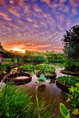 植物園夕彩:DSC_2905_調整大小.JPG