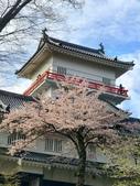 日本櫻花見:4EC784A5-F596-40BF-A73C-493C12C96D23_調整大小.jpg