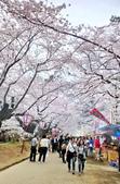 日本 平成時期的最後櫻花...2019:54C3B2E0-AA55-4836-93F7-882FFD87891A_調整大小.jpg