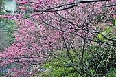 陽明山花季100:_DSC0238.JPG