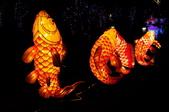 鯉魚燈:DSC_0521_調整大小.JPG