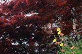 太平山遇見:DSC_2733_調整大小.JPG