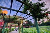植物園夕彩:DSC_2963_調整大小.JPG