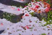 陽明山飄雪 秒變秘境: