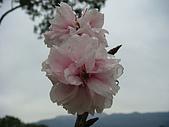 水田營地-太陽鳥:DSC04042.JPG