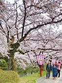 日本 平成時期的最後櫻花...2019:84BCD0D2-E346-4E06-B042-E396FBFF1366_調整大小.jpg