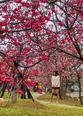 中科崴立櫻花公園 櫻花賞:IMG_20210212_161502_調整大小.jpg