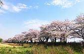 弘前公園 櫻花祭 花見:0C67B13E-0A0E-46F7-8333-DD3426A3CC14_調整大小.jpg
