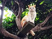 淡水國小的 貓:IMG_20200317_172255_調整大小.jpg