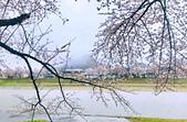 日本櫻花見:8C554AA7-7D40-4CBs7-878B-EF05685DF98F_調整大小.jpg