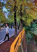 落羽杉季節:IMG_20201213_142136_調整大小.jpg
