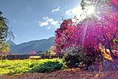 白毛台山  櫻花:IMG_20210213_084401_調整大小.jpg