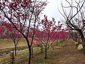 中科崴立櫻花公園 櫻花賞:IMG_20210212_160905_調整大小.jpg