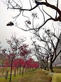 中科崴立櫻花公園 櫻花賞:IMG_20210212_160958_調整大小.jpg