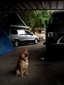 來賓-金溪烤大豬:DSC00834.JPG