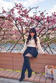 內湖 櫻花 2020:DSC_0779_調整大小.JPG