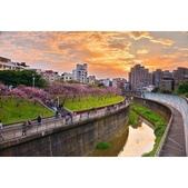 內湖 櫻花 2020:相簿封面