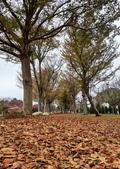 中科崴立櫻花公園 櫻花賞:IMG_20210212_163626_調整大小.jpg