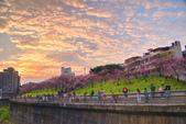 內湖 櫻花 2020:DSC_0838_調整大小.JPG