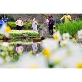 陽明春色:相簿封面