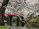 弘前公園 櫻花祭 花見:1D9610E1-4793-44C5-A5D8-9DDE73283A2D_調整大小.jpg