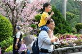2015花怒天元宮:DSC_5042_調整大小.JPG