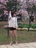 中科崴立櫻花公園 櫻花賞:IMG_20210212_163310_調整大小.jpg