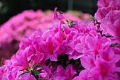 台大杜鵑花節2021:DSC_9480_調整大小.JPG