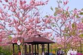 春色滿園 花旗木:DSC_0320_調整大小.JPG
