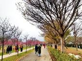 中科崴立櫻花公園 櫻花賞:IMG_20210212_163559_調整大小.jpg