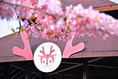 春色滿園 花旗木:DSC_0339_調整大小.JPG