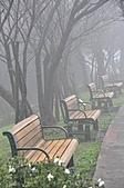 陽明山花季雨中:_DSC0139.JPG
