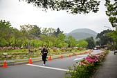 陽明山 櫻花+1:DSC_0118_調整大小.JPG