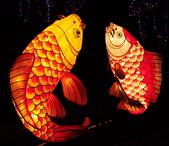 鯉魚燈:DSC_0523_調整大小.JPG