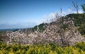 楓湖櫻花雪:DSC_0133_調整大小.JPG