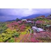 六窟櫻花:相簿封面