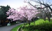 陽明山 櫻花+1:DSC_0252_調整大小.JPG