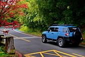 陽金公路的 紅槭:DSC_0215_調整大小.JPG