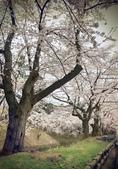 日本櫻花見:4BD266E2-F51E-4BCE-B923-6D518869EF23_調整大小.jpg