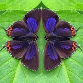 蝶:相簿封面